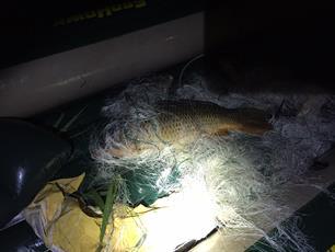 Vissen gered uit staand want, visstropers aangehouden!